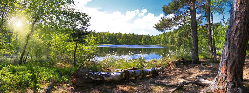 Lichtung am See im Wald